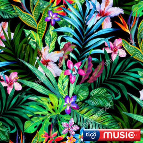 Escuchá la Playlist Fiesta Tropical